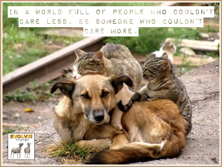 animals showing compassion - photo #12