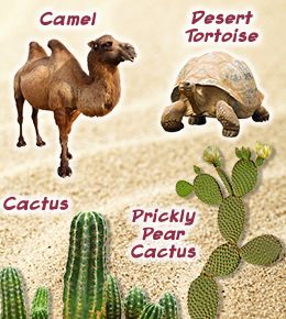 adaptive features of plants in desert