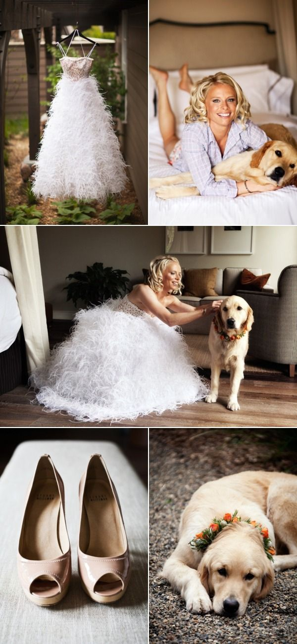 pictures with the dog on the wedding day