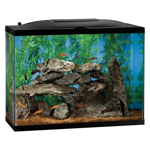 Fish tank riddle cosmobiologist 39 s dream ten fish in a for 10 fish are in a tank riddle answer