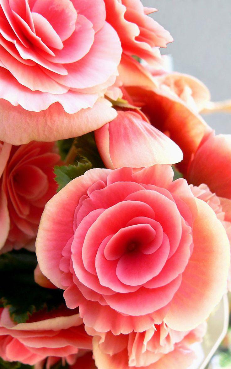 1800flowers san antonio reviews