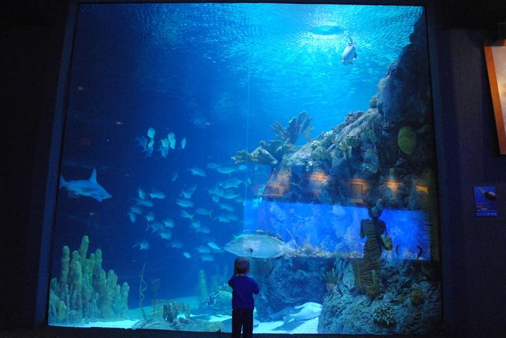 Omaha 39 S Zoo And Aquarium Fun D Pinterest