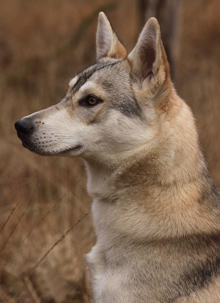 pin animals dogs 3080 - photo #43
