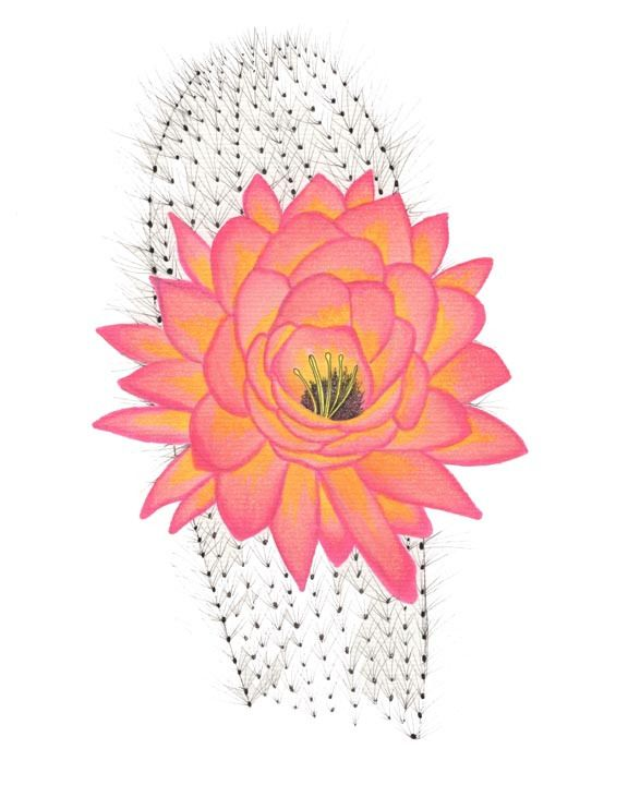 Cactus Flower Line Drawing : Cactus drawing with copic markers ilustraciones pinterest