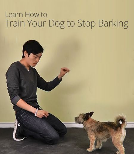 train your dog to stop barking train your dog pinterest