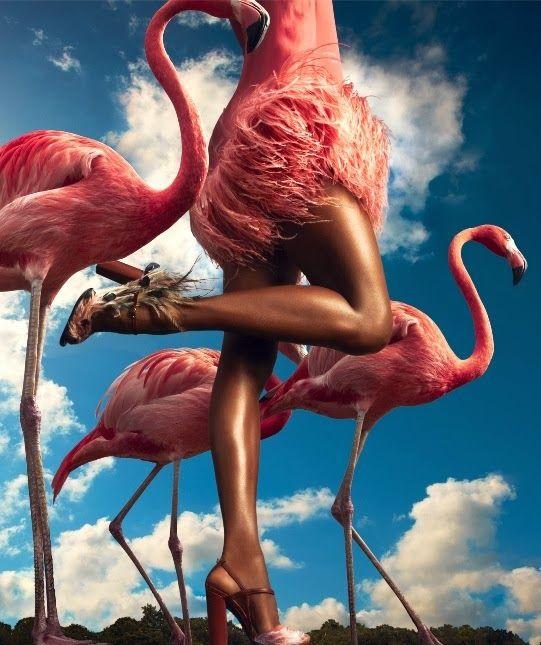 In The Pink | Harper's Bazaar Magazine | November 2013