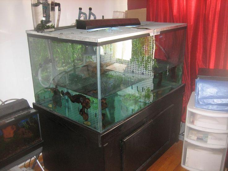... set up. Very creative. I like this. Turtle. Tank ideas Pinterest