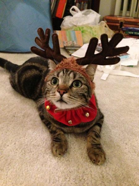 Η Χριστουγεννιάτικη γατούλα...