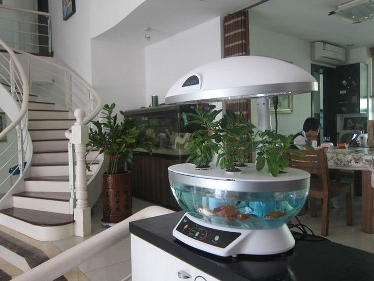 Hydroponic fish tank fishys pinterest for Hydroponics and fish
