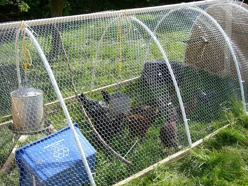 Pin by lisa pappalardo on backyard chickens pinterest for Cheap chicken tractor
