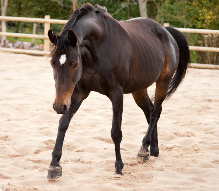 brown horse with black - photo #26