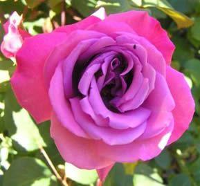 sky blue roshe  blues