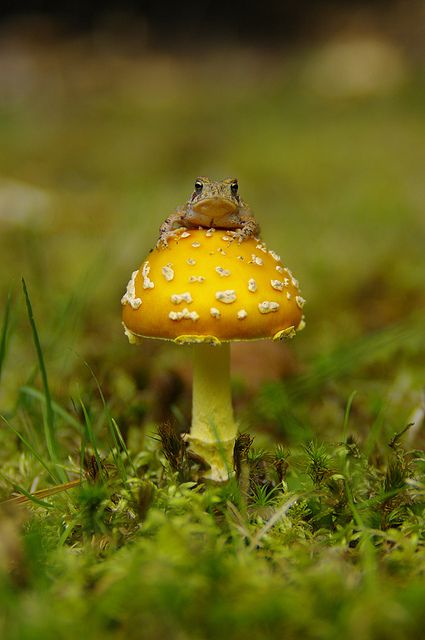 Toadstool comes with its own toad!