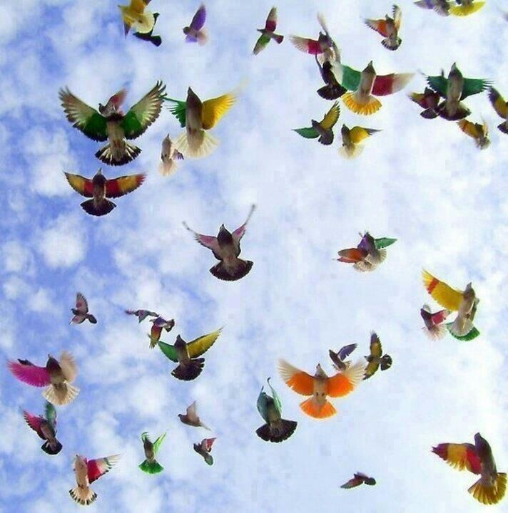 Colourful birds flying in the sky