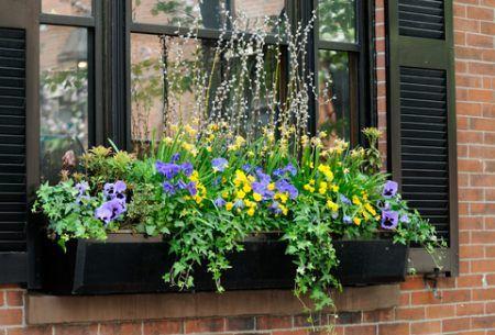 easy summer window box