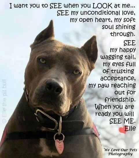 Famous Pit Bull Quotes. QuotesGram