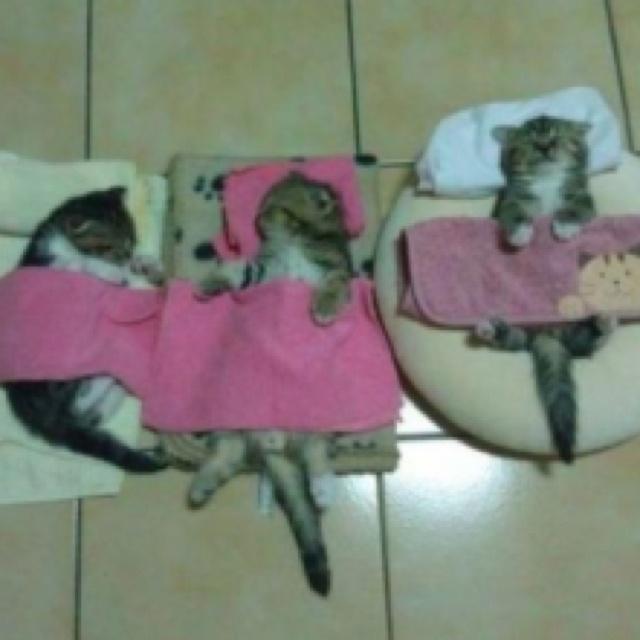 Kitten sleepover!