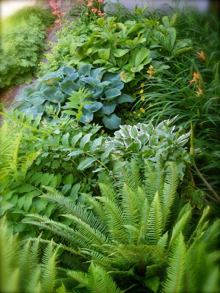 Beautiful Little Wet Spot Garden