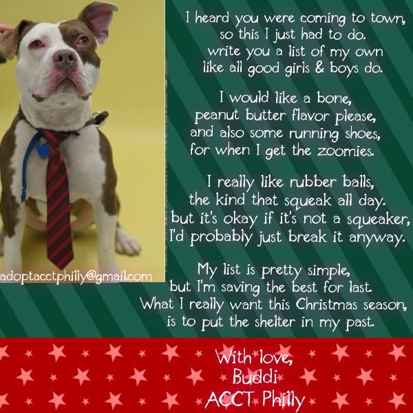 Buddi's letter to Santa! | Adoptable Dogs & Cats - ACCT Philly | Pint ...
