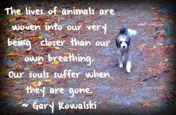 Τα ζώα  είναι  πολύτιμα  για τους ανθρώπους...