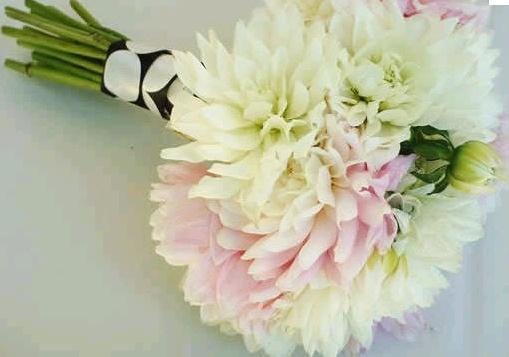 Pin By Basilico Amp Patchouli On Beautiful Flowerso
