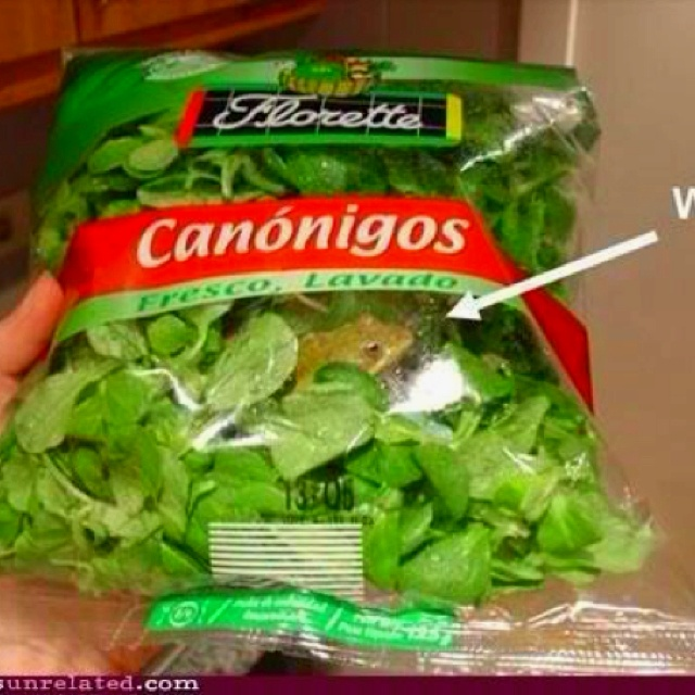 excuse me sir, but there is a frog in my salad