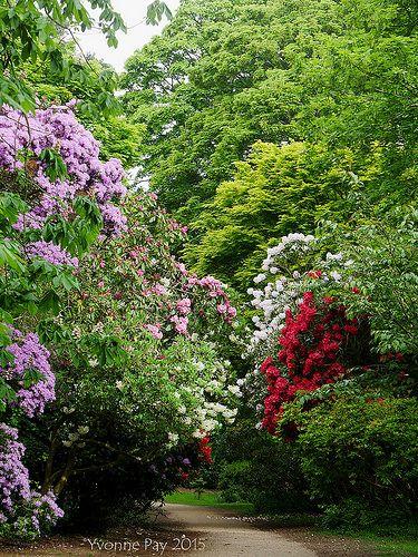 eastern lawn landscape plant life
