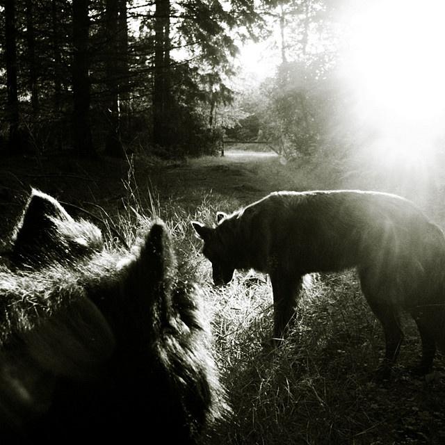 morning dogs. okay, who has the tobasco?: http://pinterest.com/pin/257127459946136117/