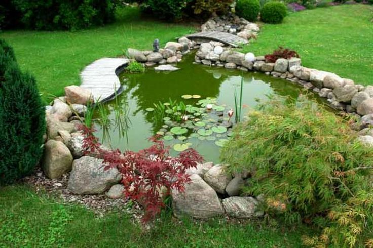 Backyard Chickens Duck Pond : Pond for pet ducks backyard chicken landscaping  Charming Backyard