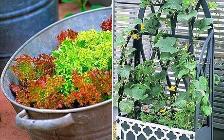 Beauty getting my garden on pinterest - Growing vegetables in a small space concept ...