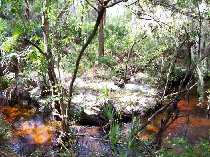 Pin by melissa boyd on florida things to do pinterest for Fish creek florida