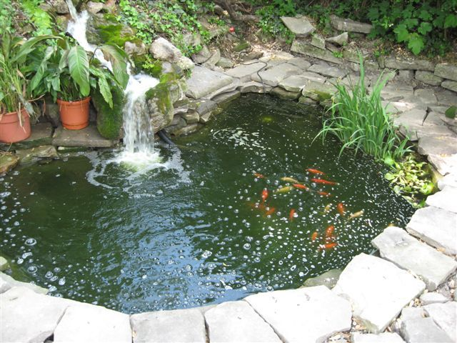 Goldfish pond garden plants ides pinterest for Outdoor goldfish pond ideas
