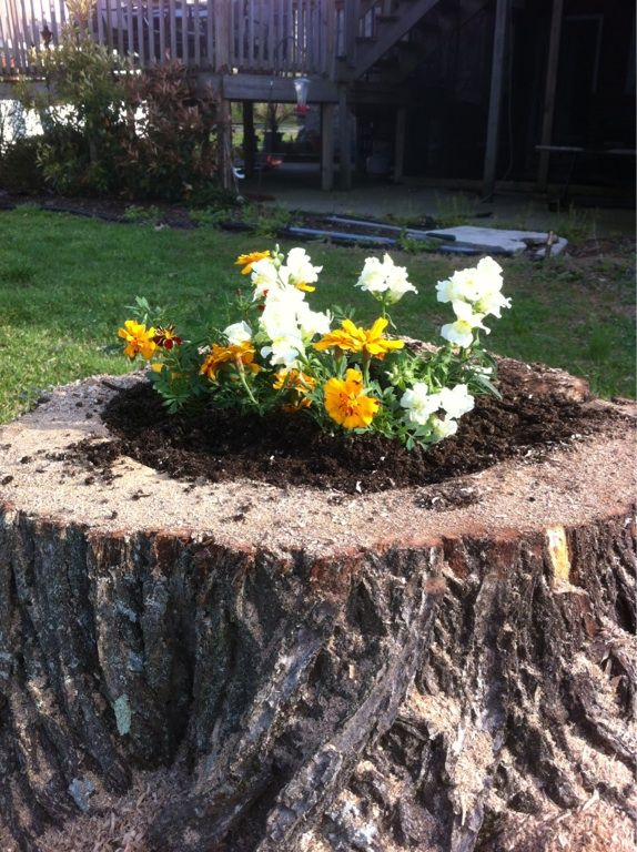 Flower bed in a stump