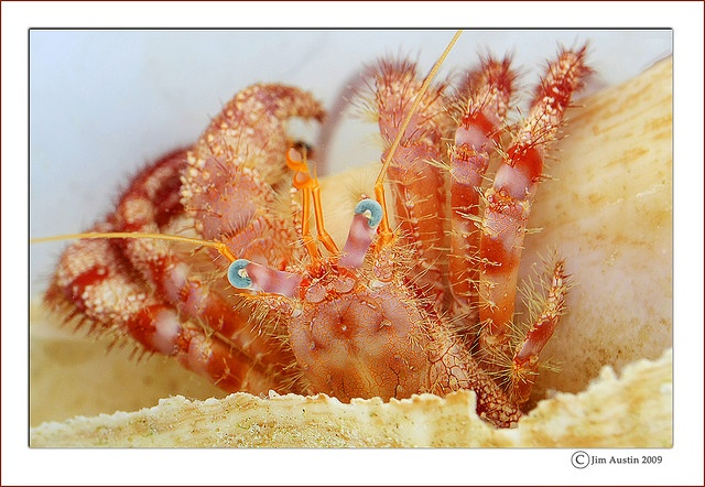Hermit crab mister