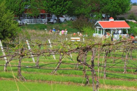 Building a grape trellis gardening pinterest - How to build a grape vine support the natural roof ...