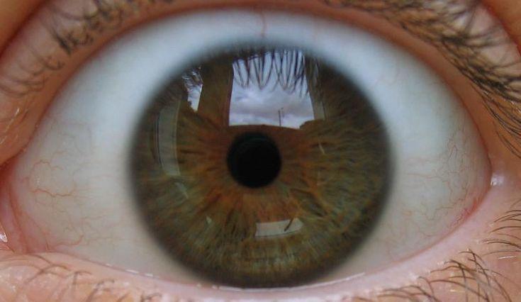 Joueb de muche les yeux marrons verts yeux pinterest - Yeux vert marron ...