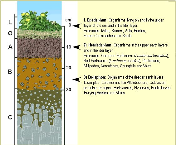 Soil layers google search odds and ends pinterest for 6 layers of soil