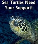 You can help by visiting www.conserveturtles.org!