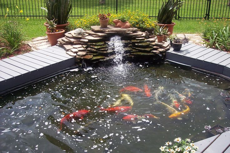 Koi pond surrounded by deck with water fall ponds for Koi pond deck