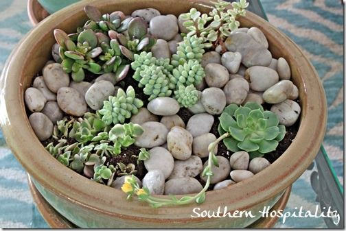 tabletop indoor garden terrarium and succulent dish
