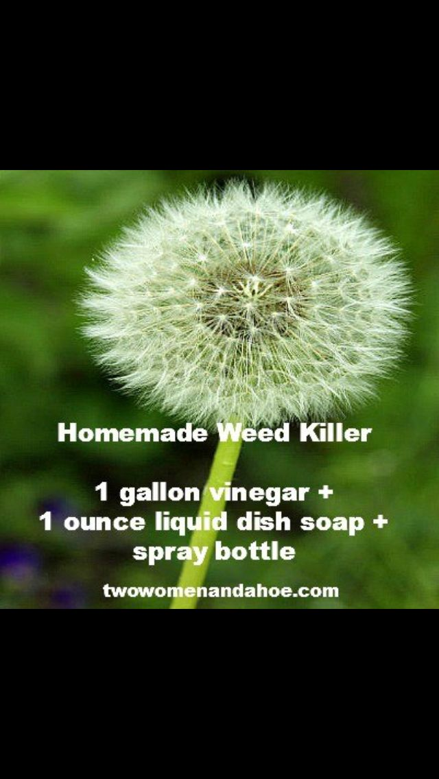 Organic weed killer great tips pinterest