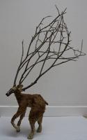 The Carizzo Plains Pygmy Deer - Danielle Schlunegger