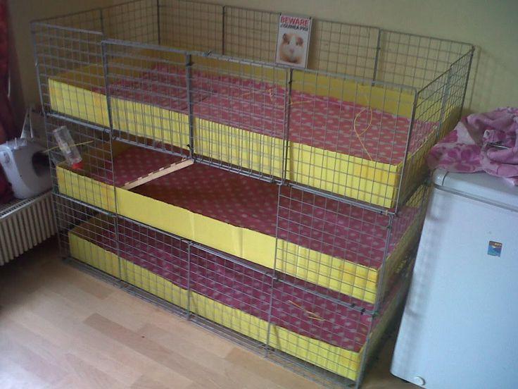 unique guinea pig cages zoe 39 s guinea pigs pinterest