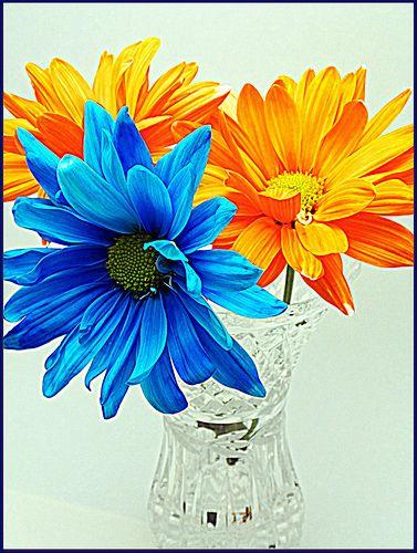orange and blue color contrast miss 4 h floral arrangement pinter. Black Bedroom Furniture Sets. Home Design Ideas