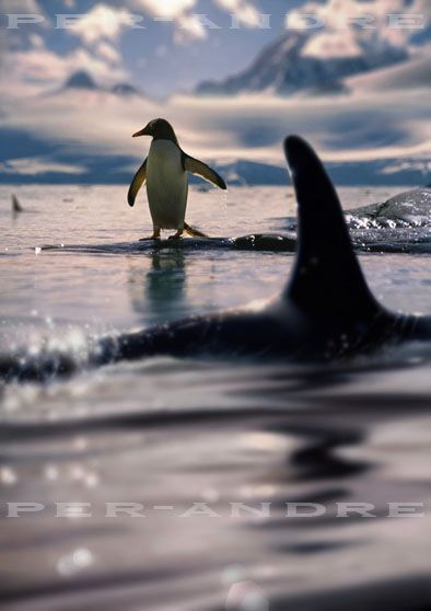 Killer whale and penguin fans stay tuned for more playoff action