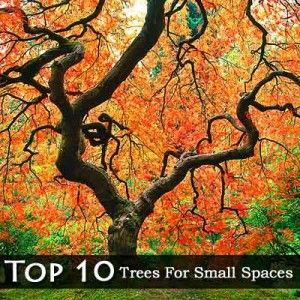 Top 10 trees for small spaces trees bushes and shrubs for Slender trees for small spaces