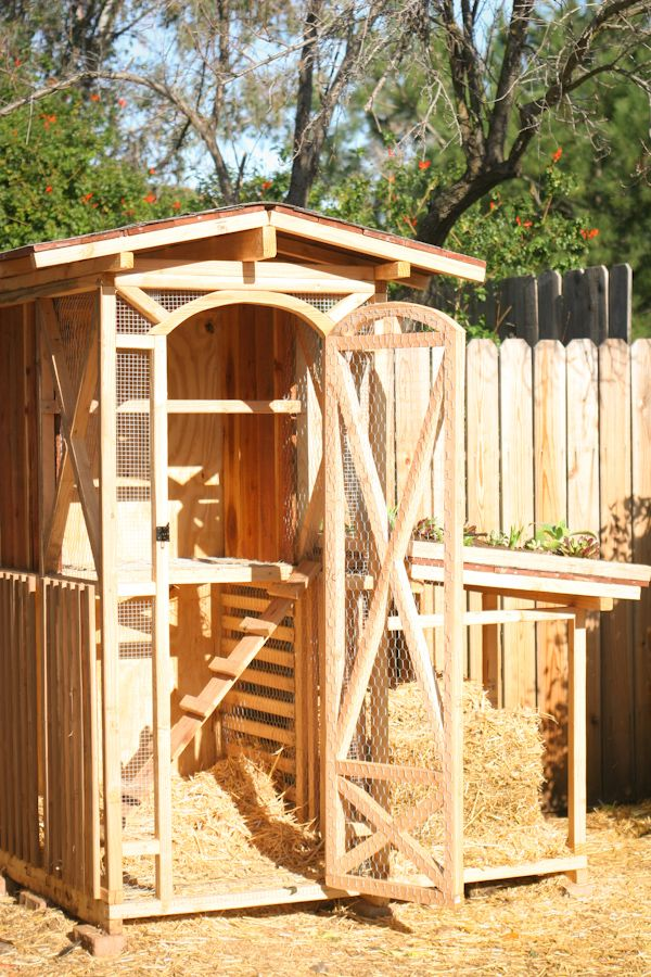 phase 1of a chicken coop with a green roof