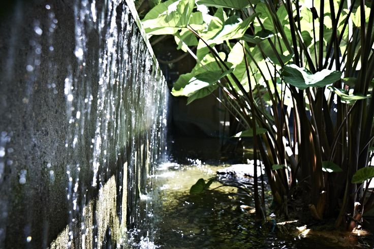 Plants Water Feature Water Features Ponds Pinterest