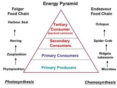 chemosynthesis vs