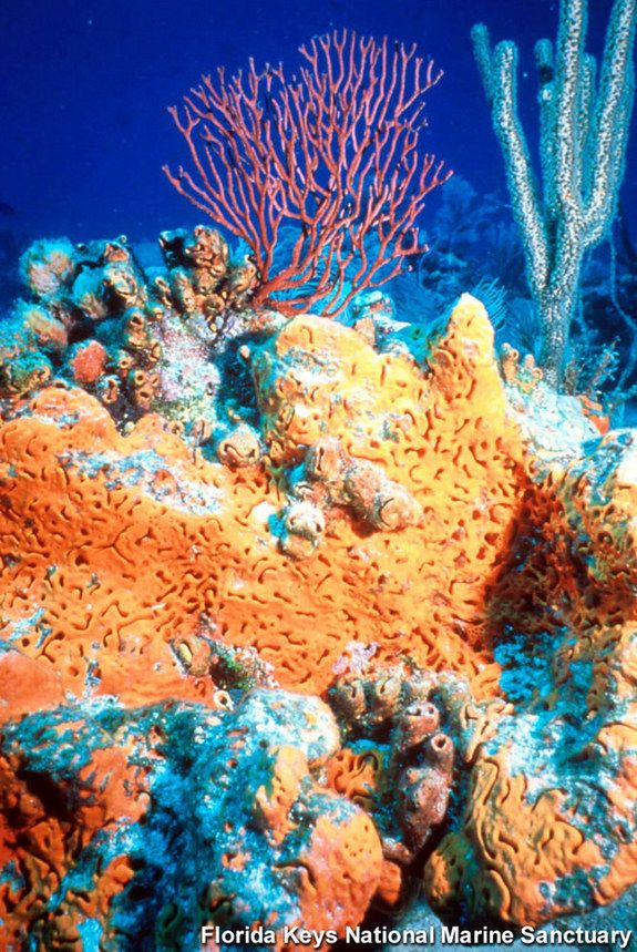 Soft corals From the Deep Blue Sea Pinterest